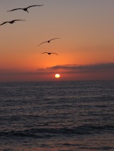 Birds into the Sunset at Hermosa Beach