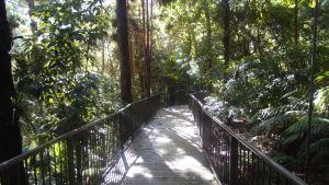 Rainforest board walk in the Botanic Gardens