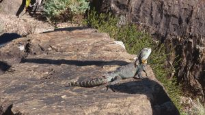 Awesome big lizard