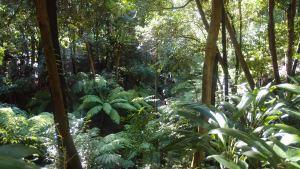 Lovely rainforest