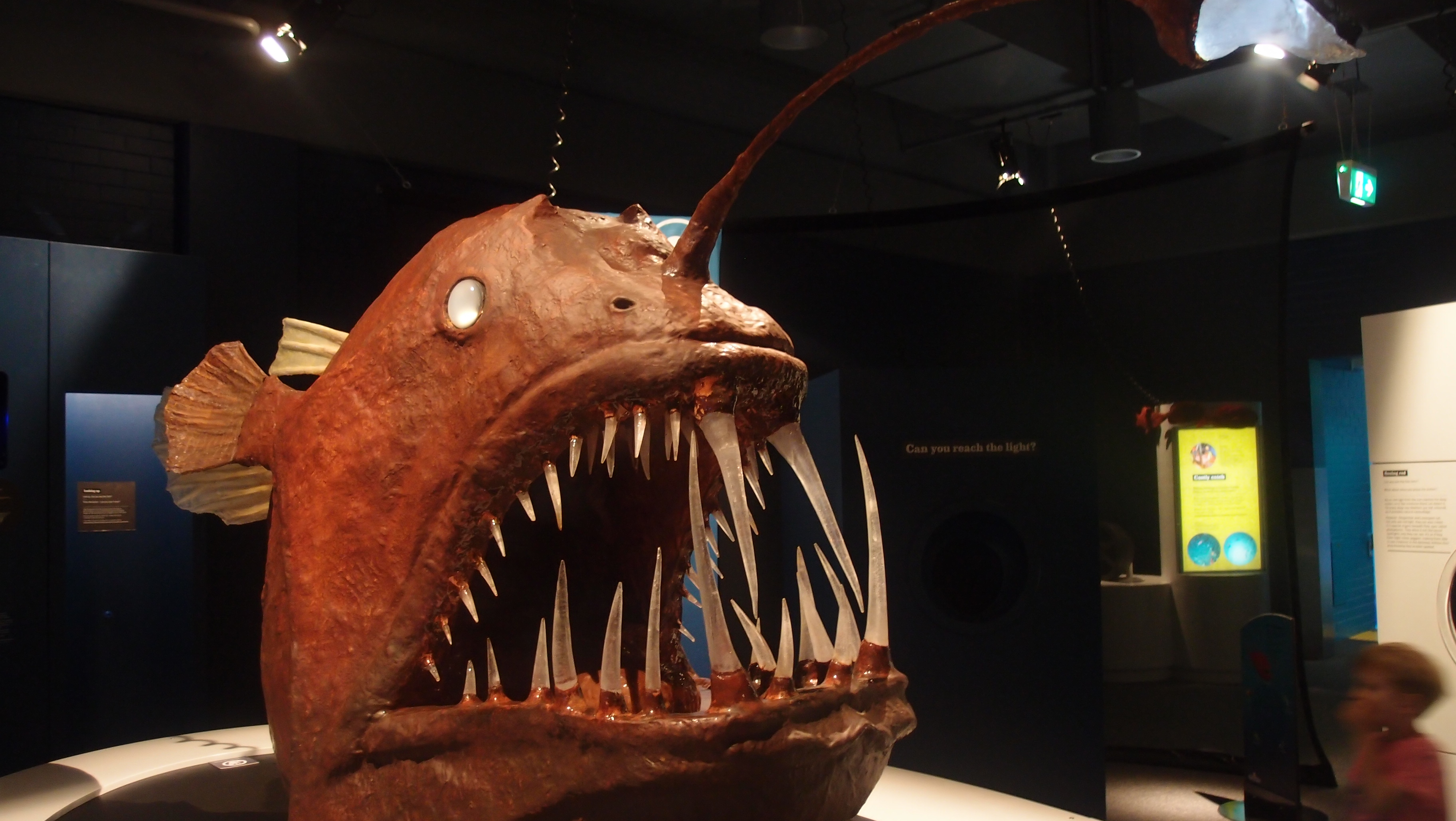 Weekend in canberra meseemeese for Angler fish size