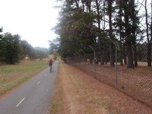 Cycling along a kangaroo-clad golf course