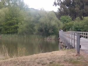 Bridge with swans