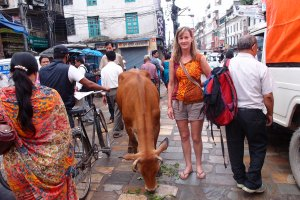 Found a cow on our way to Durbar Squares