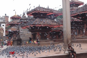 So many pigeons!