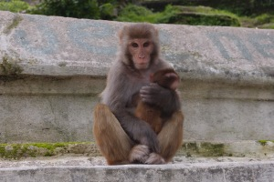 I saw a monkey breastfeeding!