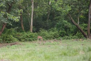 We also saw a spotted dear (just like bambi) hanging out with a bunch of monkeys!