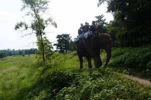 Walking toward to river, elephants are so much better than a 4x4 or ATV!