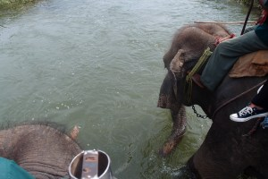 Our elephants having a drink whie a crocodile chils out nearby