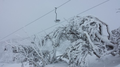 Snow gum and Mount Perisher Double Chair