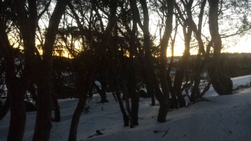 First light though snow gums