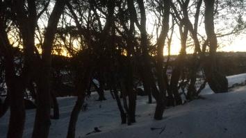 First light though snow gums
