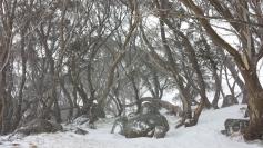 Gums at Kahane loge in snow storm