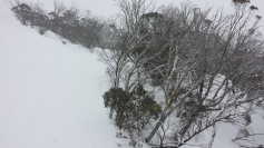 Gums at North Perisher in snow storm