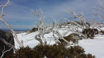 Beautiful gums at top of Ridge Chair
